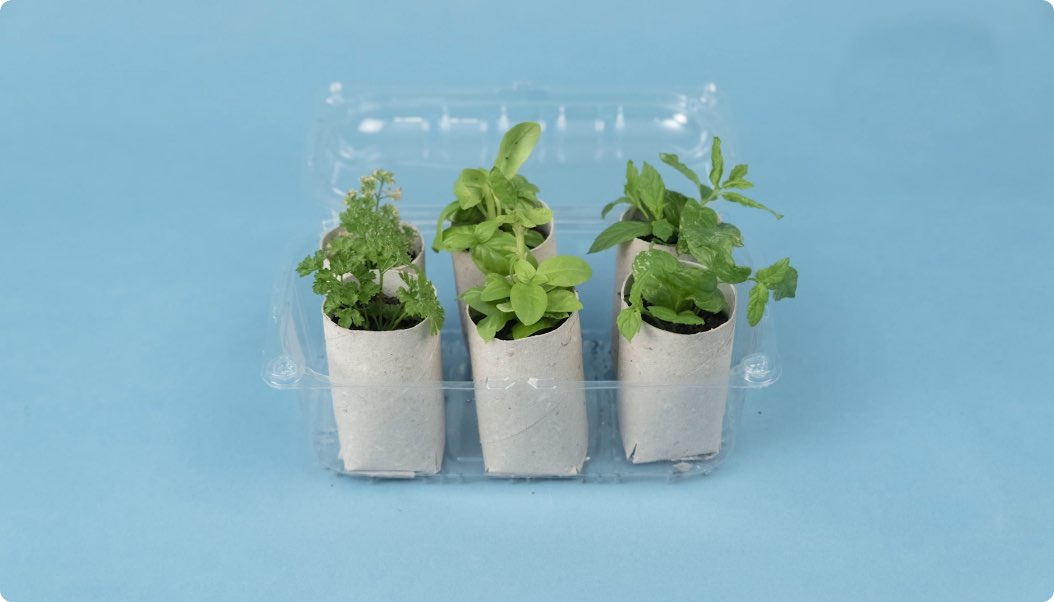 piante in serra fai da te